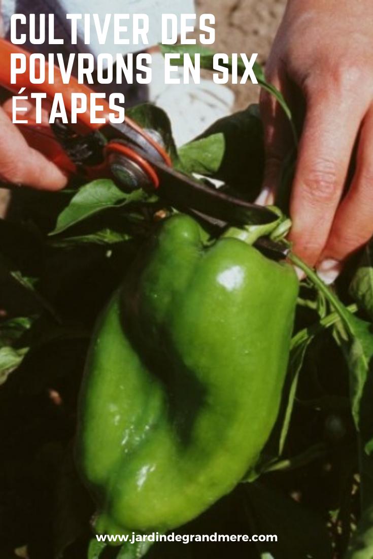Cultiver des poivrons en six étapes Cultiver, Astuce