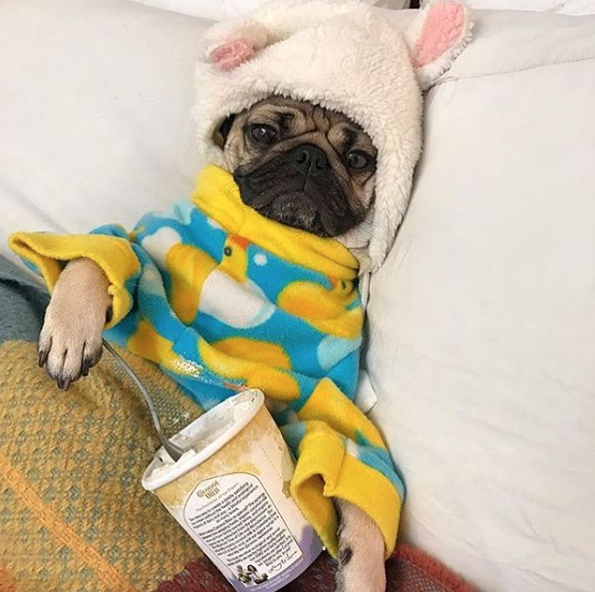 Instagram Accounts That Combine Your Two Favorite Things Food And Dogs Bloom Doug The Pug Dogs Pampered Pooch