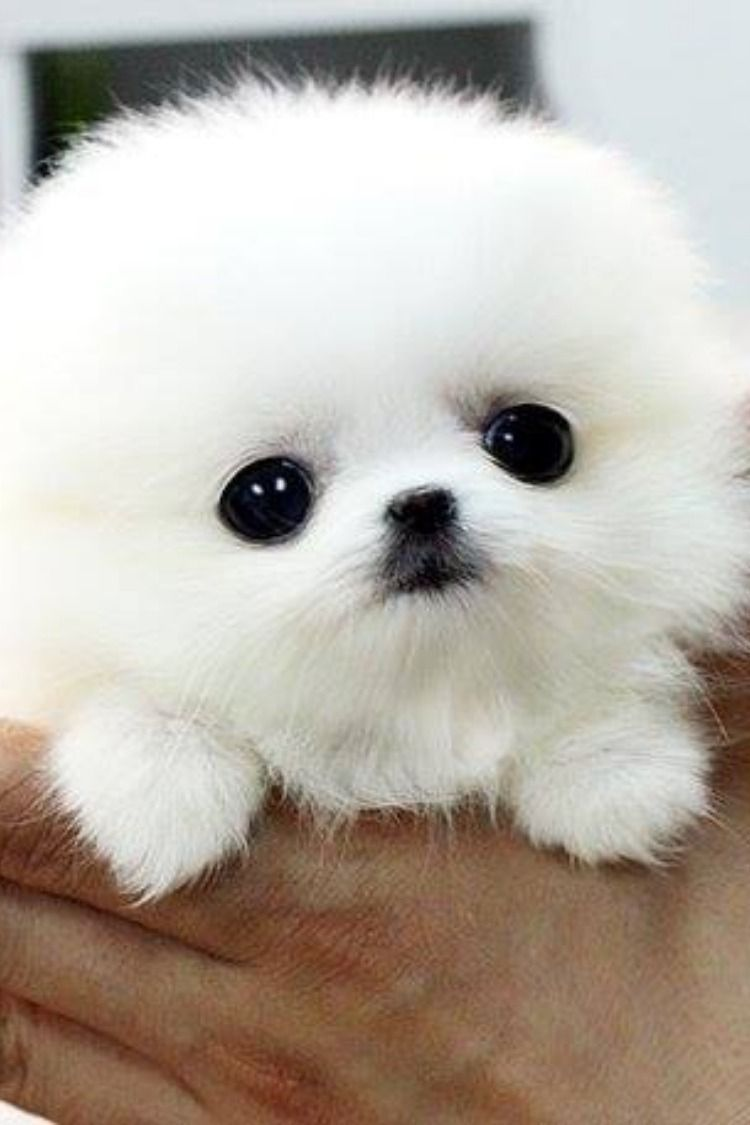 21 Incredibly Adorable Pups That Will Melt Your Heart Cute Baby Dogs Cute Puppy Breeds Baby Dogs