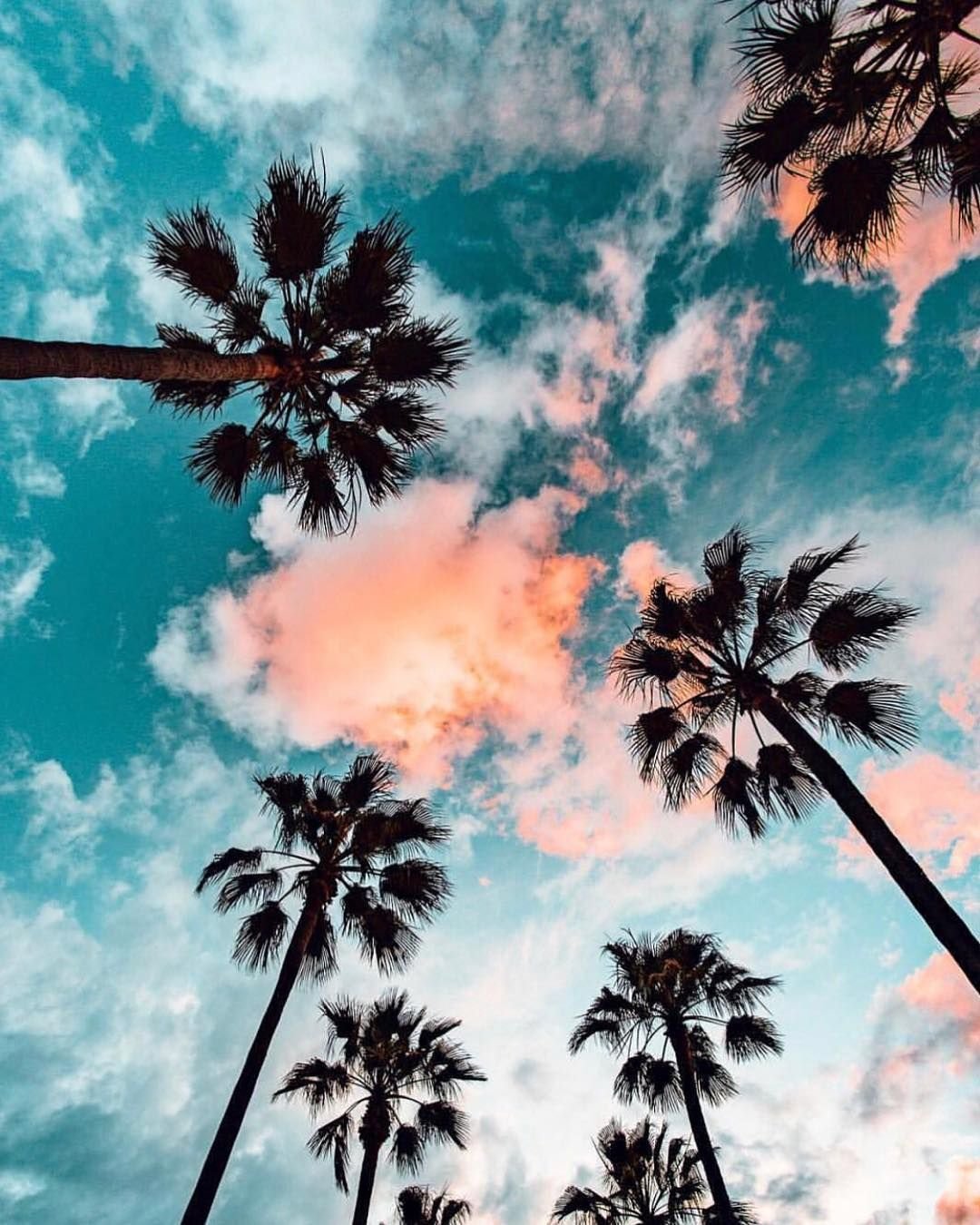 You Had Me At Palm Tree // #LosAngeles Bianca Cheah