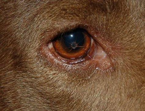 Pin on Dog Remedies