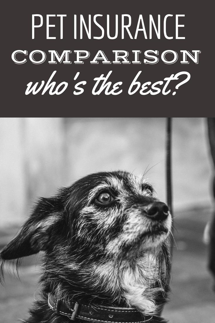 Pet Insurance Reviews 2020 Cost & Coverage Comparisons