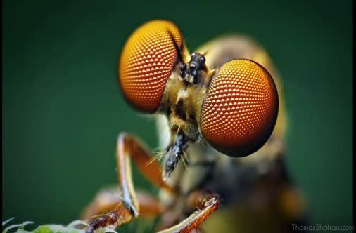 Thomas Shahan: How To Take Photos Of Bugs And Other Small Creatures