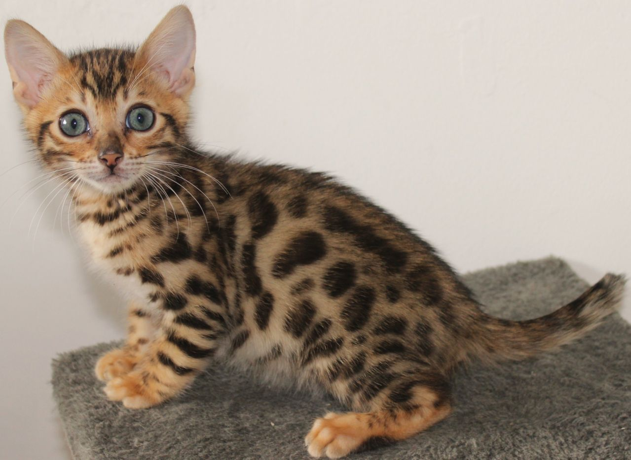 Barkkit Parents Frostfoot Owlstar 1 Week Female Get Looks From Father Shy Adventurous Playful Fun Fast Me Warrior Cats Rpg Kittens Warrior Cat