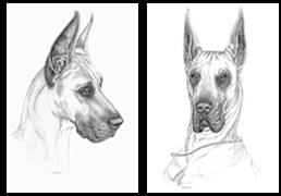 How To Draw Great Danes Dog Art Great Dane Dane