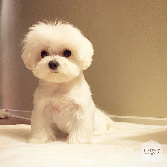 Ink361 The Instagram Web Interface Anak Anjing Maltese Anak Anjing Lucu Binatang Lucu