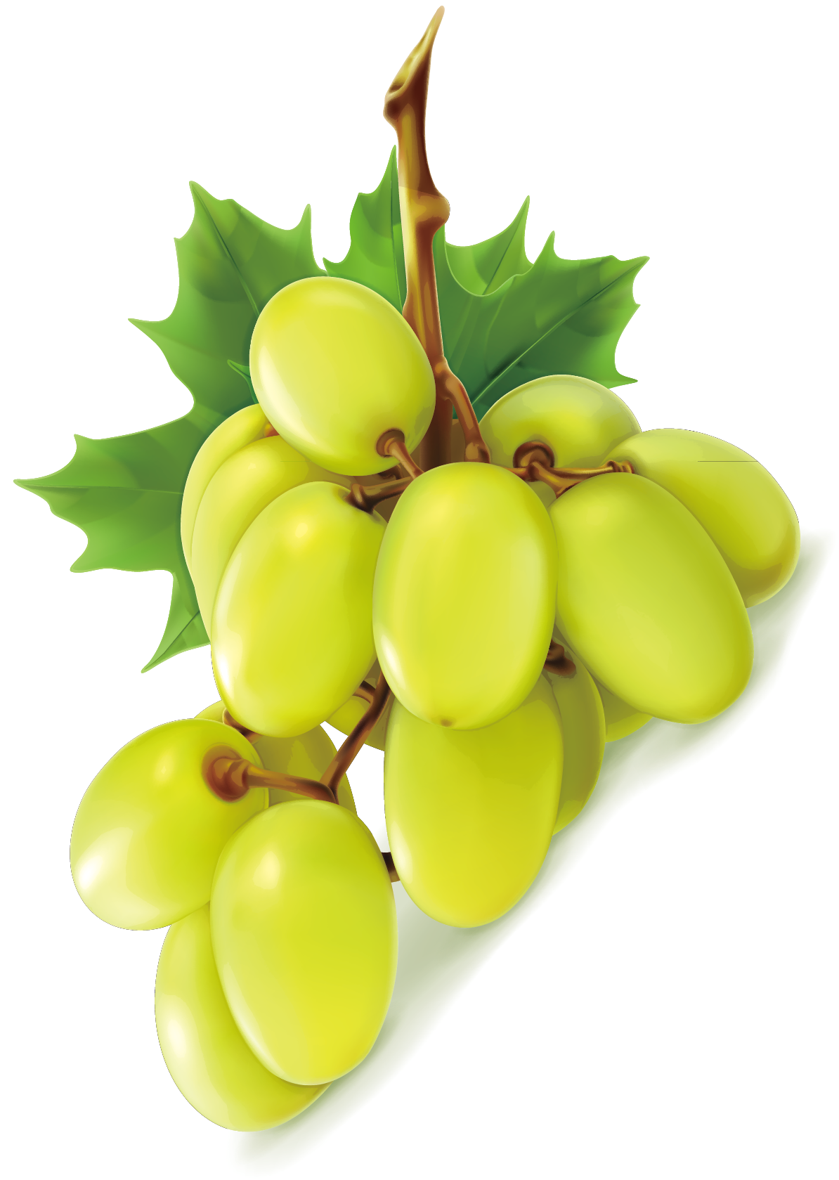 Pin By Pngsector On Grape Png Image Grape Clip Art Green