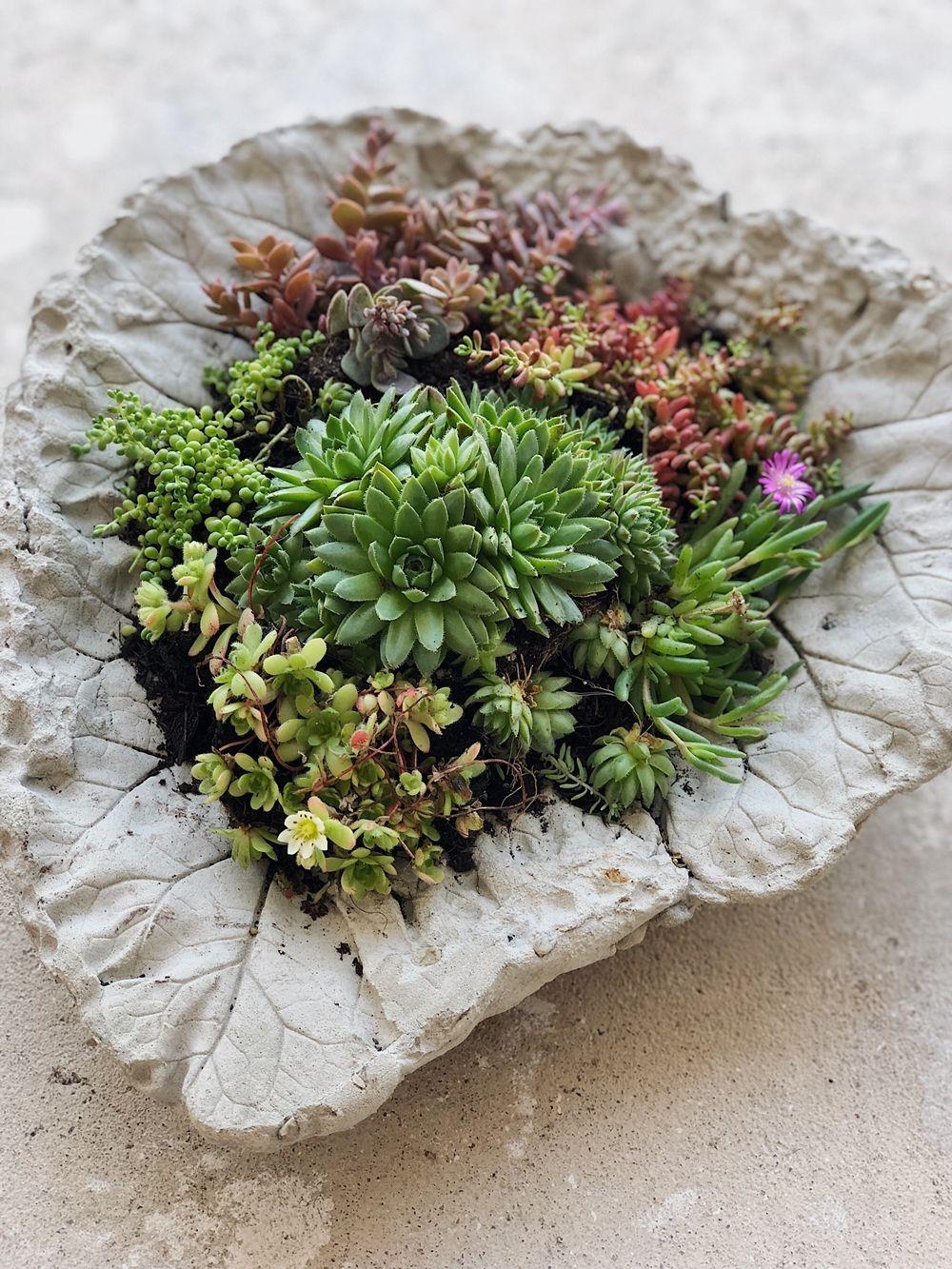 Photo of DIY – Beton Pflanzschalen aus Rhabarberblättern für den Garten – Fashion Kitchen
