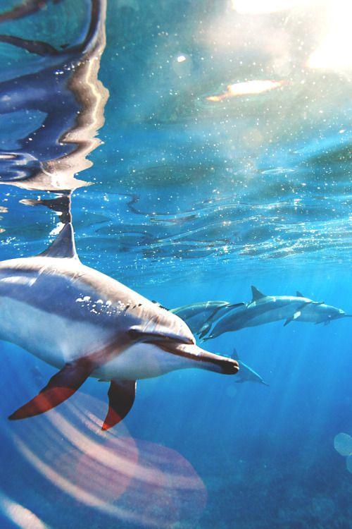 Spinner Dolphins - Big Island, Hawaii...