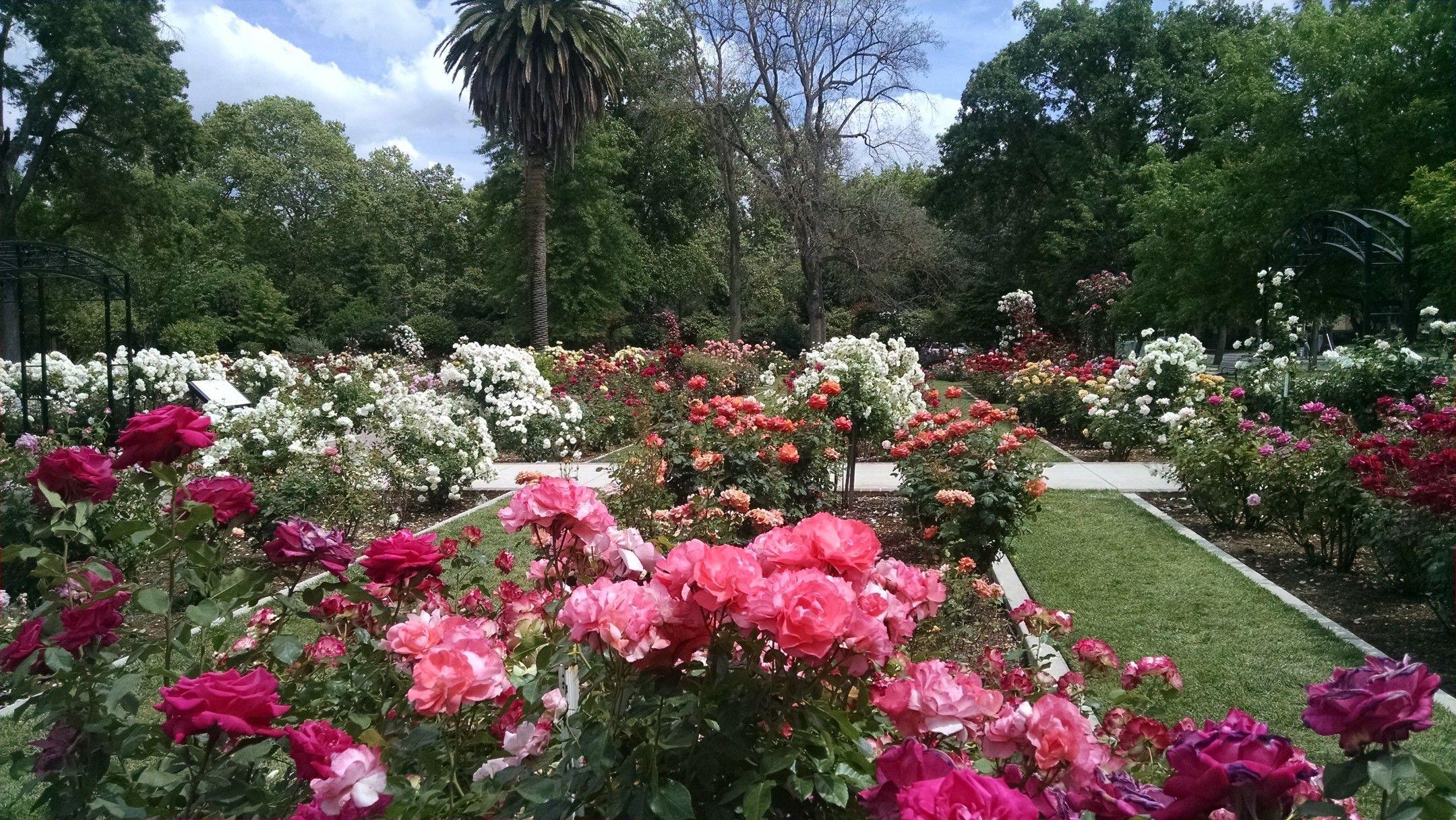 McKinley Park rose garden Sacramento | California - Been There, Done ...
