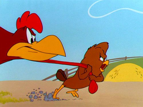 Cartoon Pics And Quotes About Chickens: Foghorn Leghorn Chicken Hawk