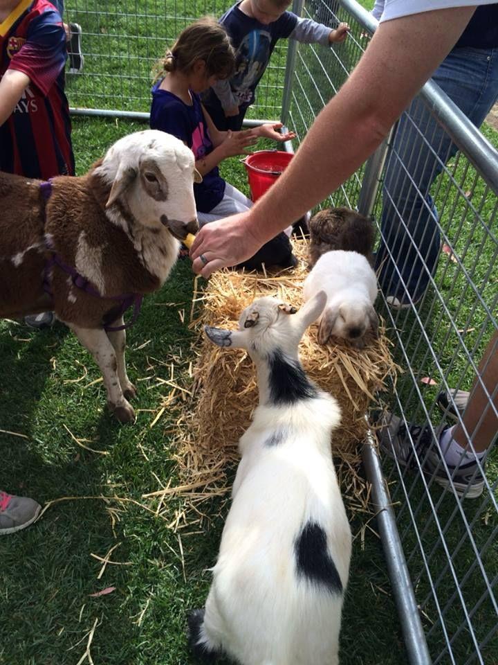 FarmFriends_PonyRides Petting zoo party, Zoo animals, Zoo