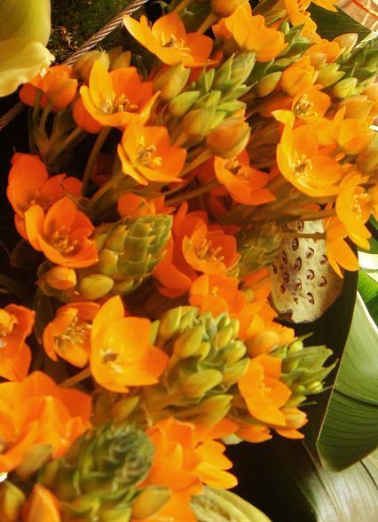 flora guidonet: Google+