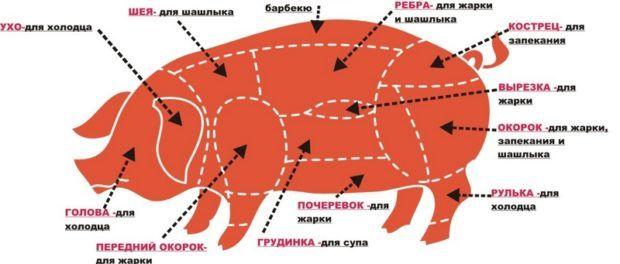 Схема разделки свиньи