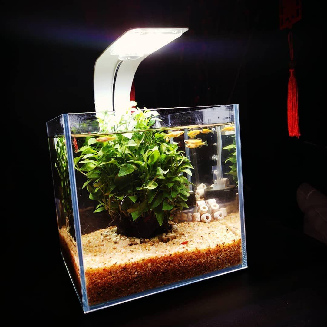 45 Nano Planted Tank Design Inspirations To Displayed At
