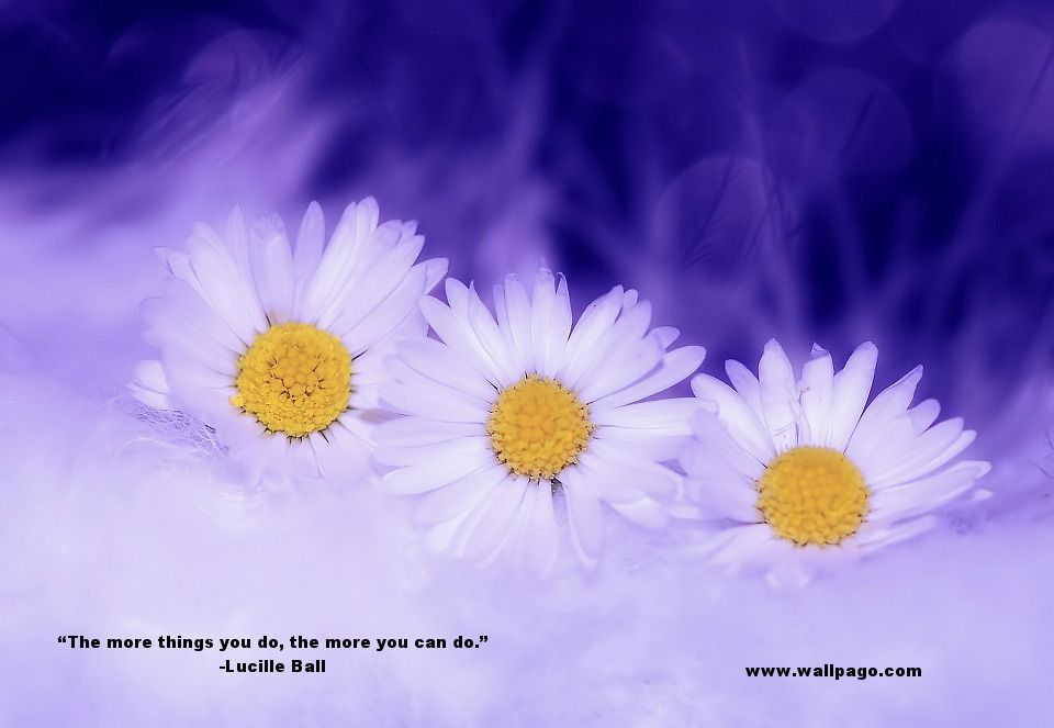 Top 30 Lucille Ball Quotes Wallpago Pinterest Flowers Daisy