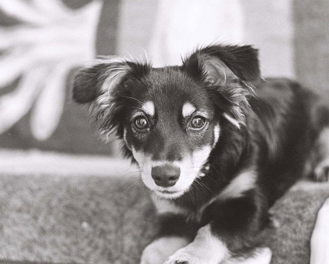 To najlepszy piesek w całym Poznaniu polecam ... #dog #dogsofinstagram #dogs #puppy #dogstagram #instadog #pet #doglover #love #dogoftheday #cute #doglovers #instagram #pets #of #puppylove #doggo #puppies #cat #doglife #puppiesofinstagram #ilovemydog #dogsofinsta #animals #hund #doggy #petstagram #k #animal
