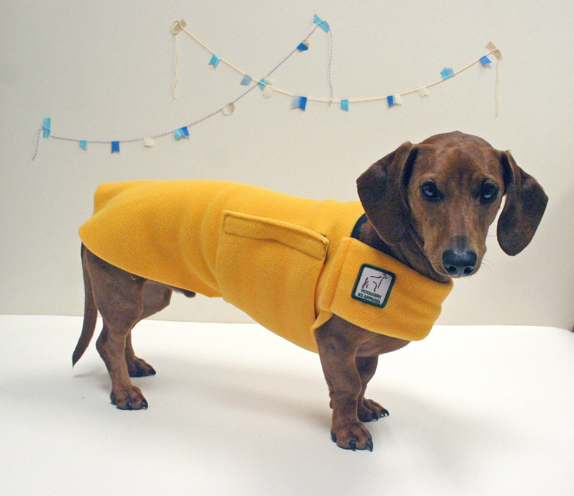 Fetching Finds My New Voyager Jackets Dachshund Clothes