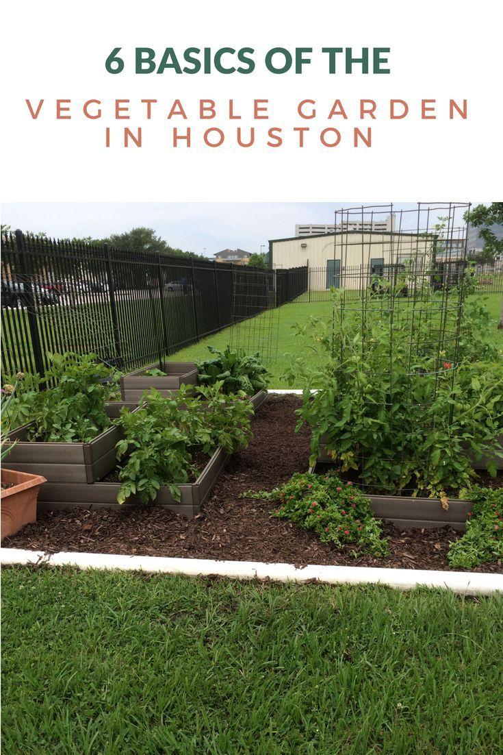 6 Basics Of The Vegetable Garden In Houston Houston 400 x 300