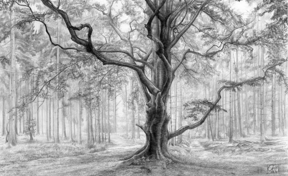 Pencil Drawing - Tree