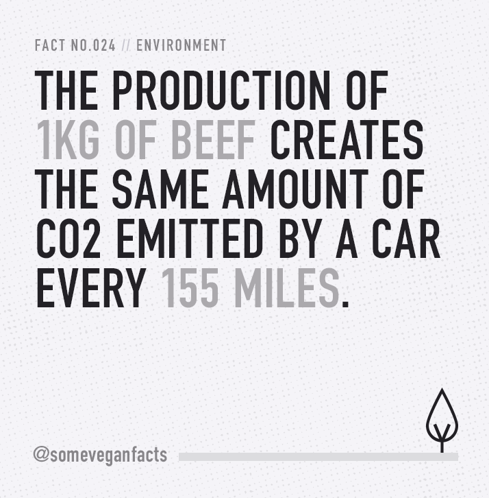 The production of 1kg of beef creates the same amount of CO2 emitted by a car every 155 miles. #earthday #govegan
