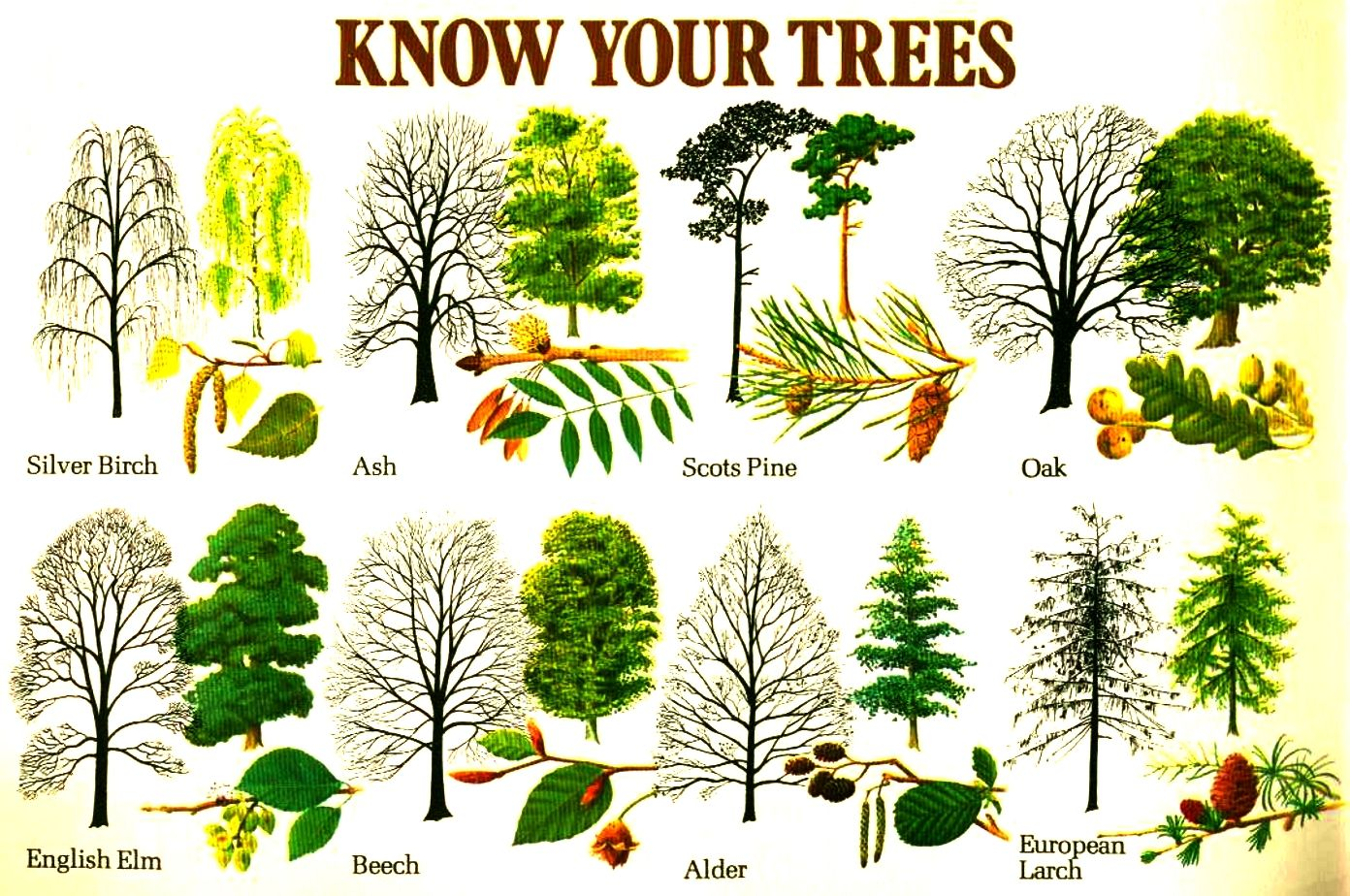 Know Your Trees Learning Love Pinterest Tree Identification