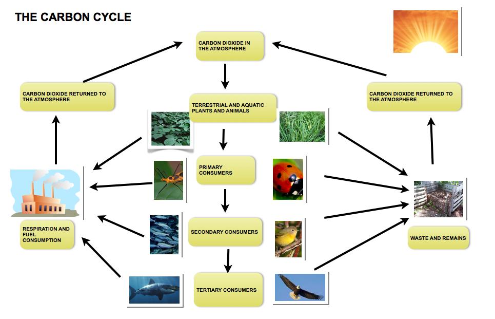 ielts task process diagram carbon cycle dc ieltsdc ielts ielts task 1 process diagram carbon cycle dc ieltsdc ielts