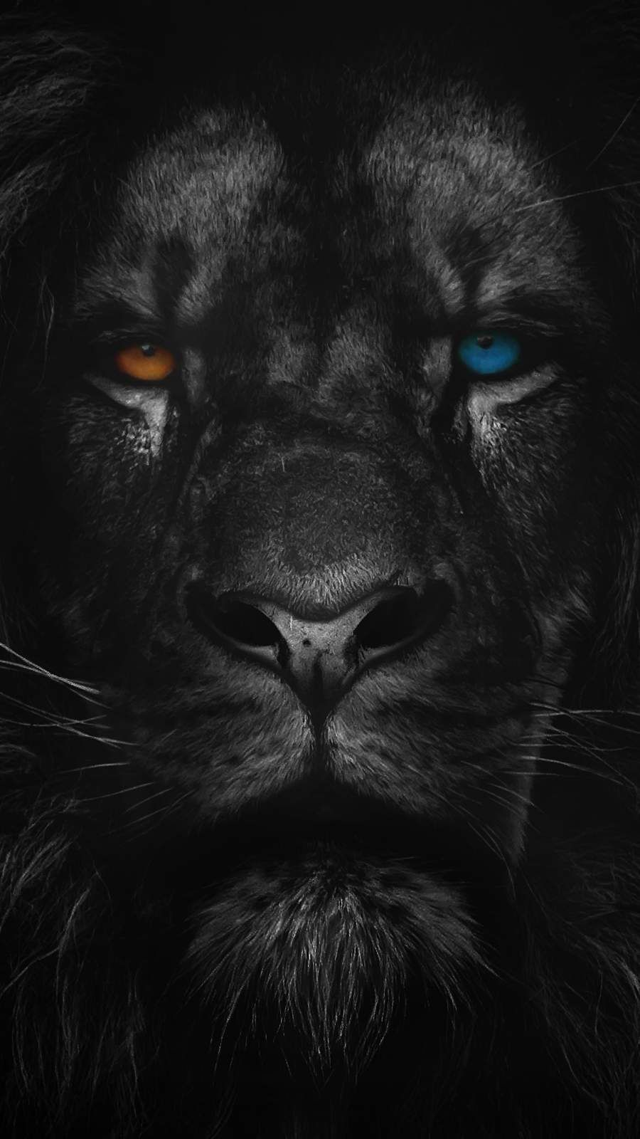 Heterochromia Lion iPhone Wallpaper - iPhone Wallpapers