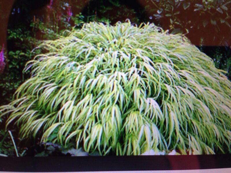 Free Plant Identification Shade grass, Plants under