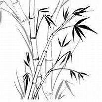 Bildergebnis Fur Bambus Zeichnen Tusche Pinterest Bambu Dibujo