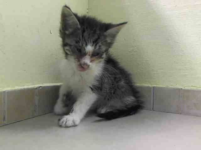 TO BE DESTROYED 8/21/14 ** BABY ALERT! ONLY 7 WEEKS OLD! 3