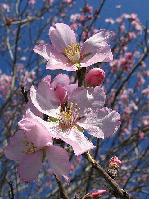 Pin On Spring