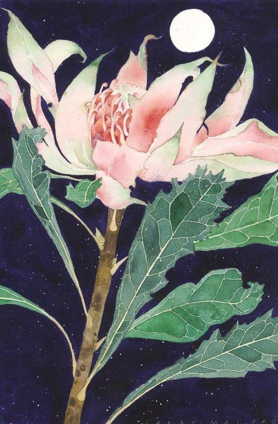 Pink Warratah Floral Watercolor Botanical Art Lovers Art