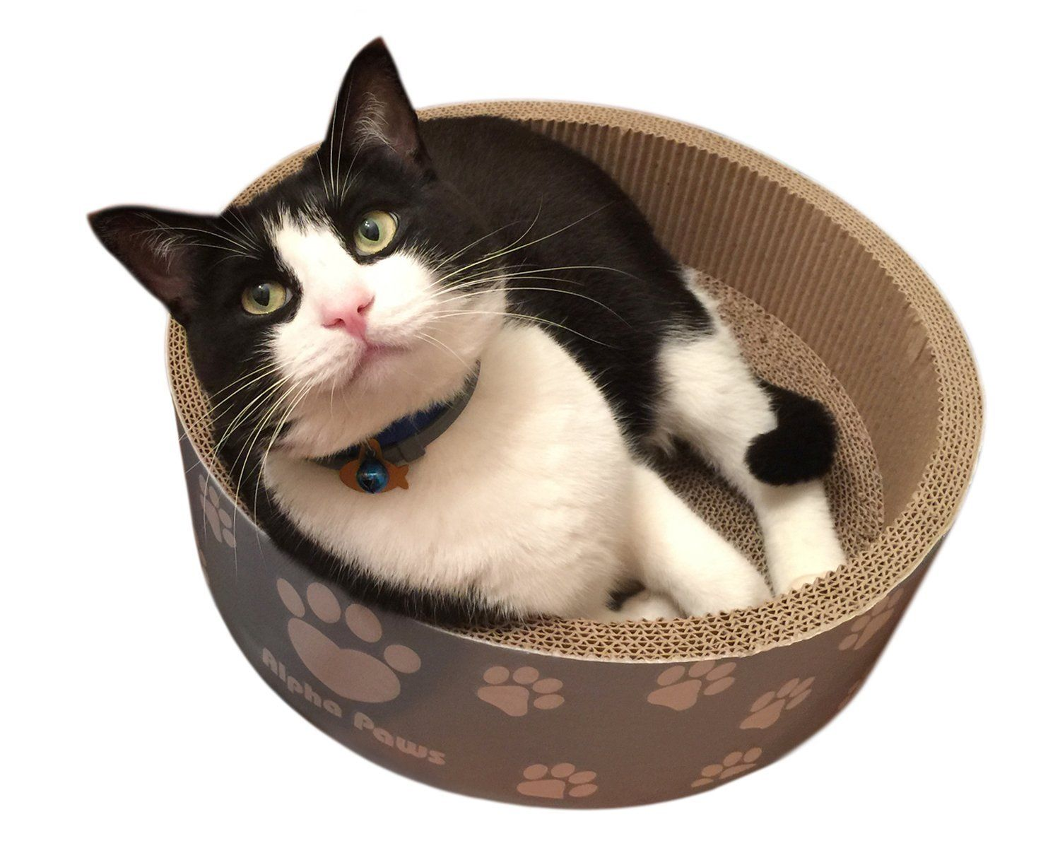 Communication on this topic: How to Clean Cat Beds, how-to-clean-cat-beds/
