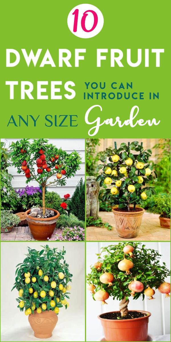 10 Zwergobstbaume Die Sie Einfach In Topfen Anbauen Konnen Anbauen Die Einfach Konnen S Dwarf Fruit Trees Fruit Tree Garden Container Gardening Vegetables