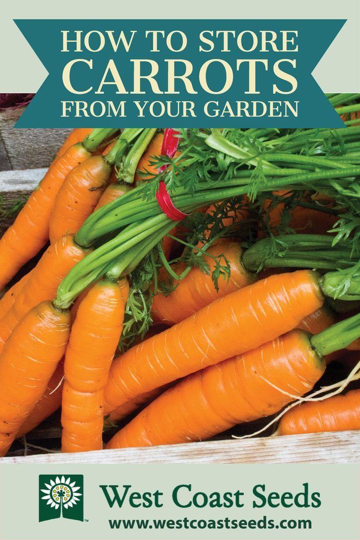How to Store Carrots How to store carrots, Home grown