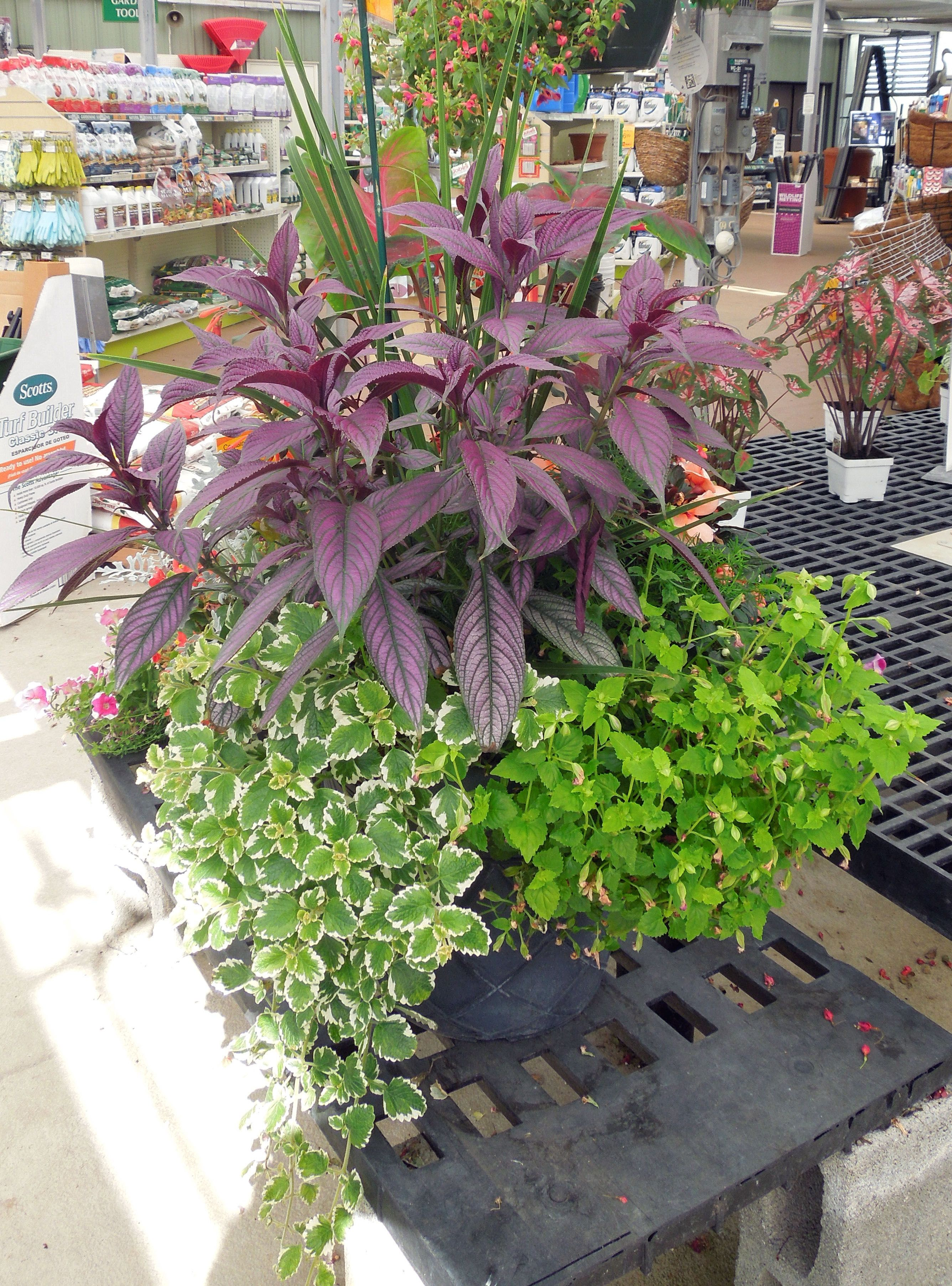 Amazing Summer Container Gardens Are In Store At Stauffers Of Kissel Hill Garden  Centers! Available In Full Sun, Part Shade Or Full Shade.