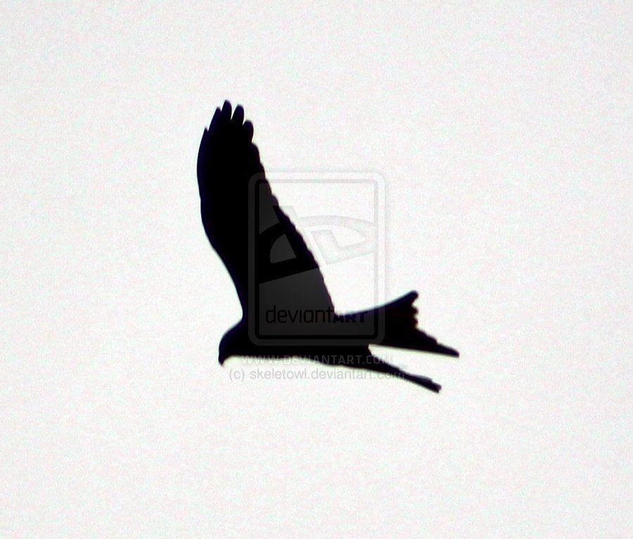 kite_silhouette_by_skeletowl-d58sp93.jpg (900×766)