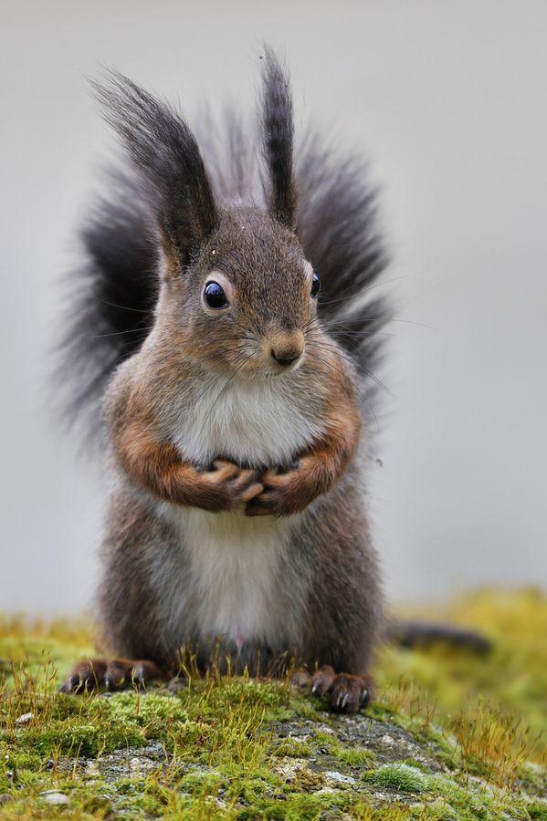 Squirrel World by Josef Gelernter on 500px