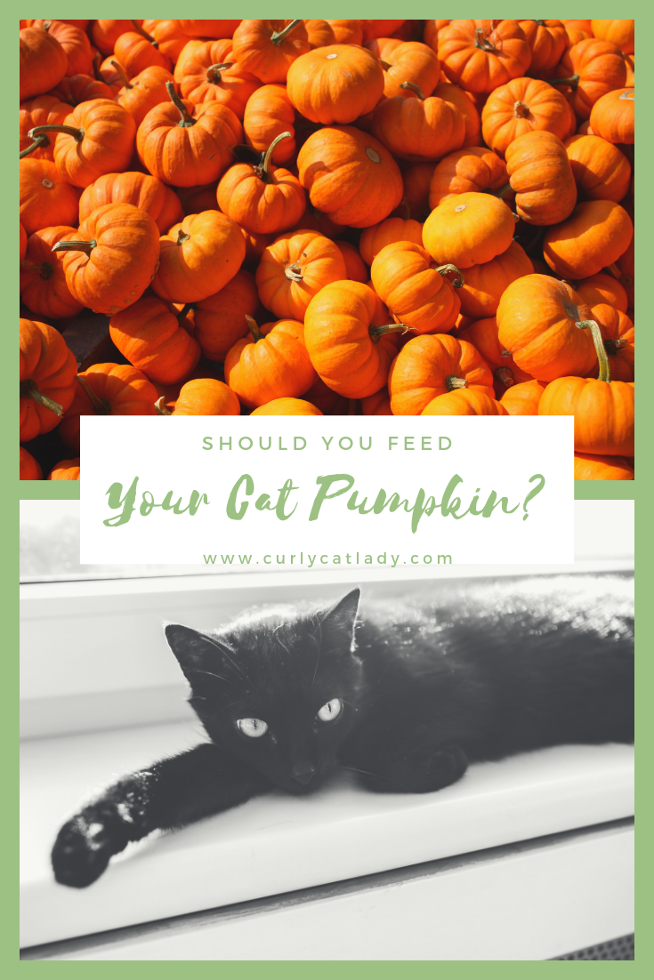 Can You Feed Your Cat Pumpkin? Yes! (And You Should