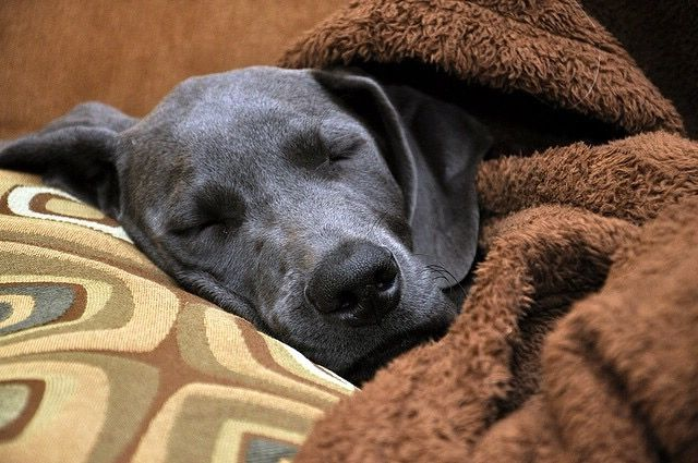 At Home Treatments For Pet Colds Pet Insurance Reviews Cat Illnesses Dog Cold