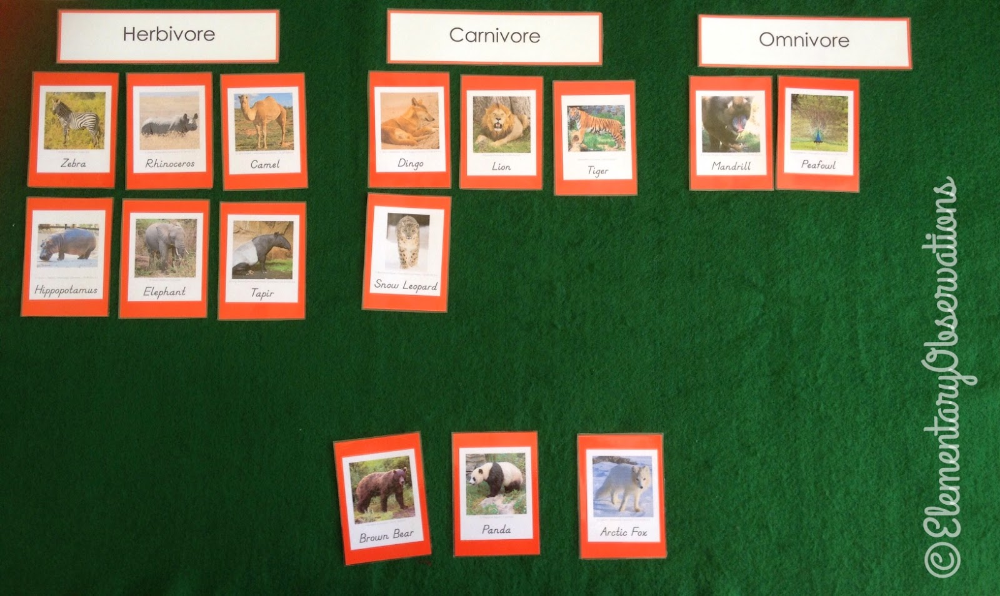 Elementary Observations Herbivore/Carnivore/Omnivore
