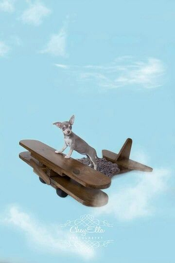 Paisley taking a flight at 1lb 6oz.