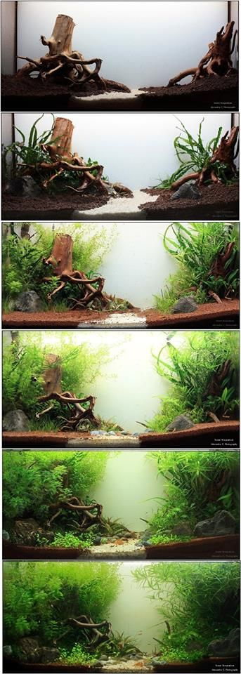 [Forest Temptations - 3 months old - The forest is taking over] source  : Tranquility Aquarium http://www.facebook.com/tranquilityaquarium.craiova?fref=photo