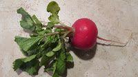 Spring Radishes   American Vegetarian
