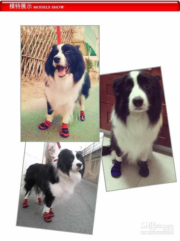 Zapatos para perros.