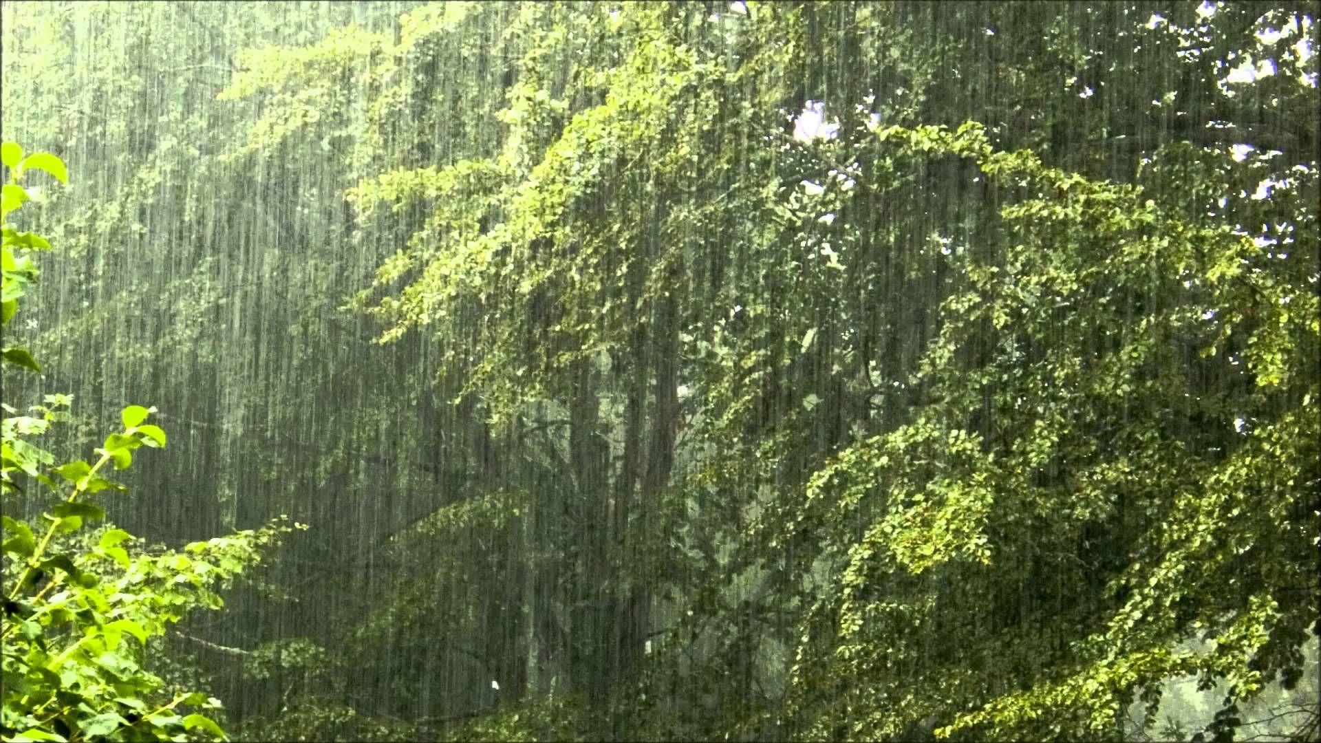 Torrential rain - relaxing rain with nature sounds | Nature | Rain