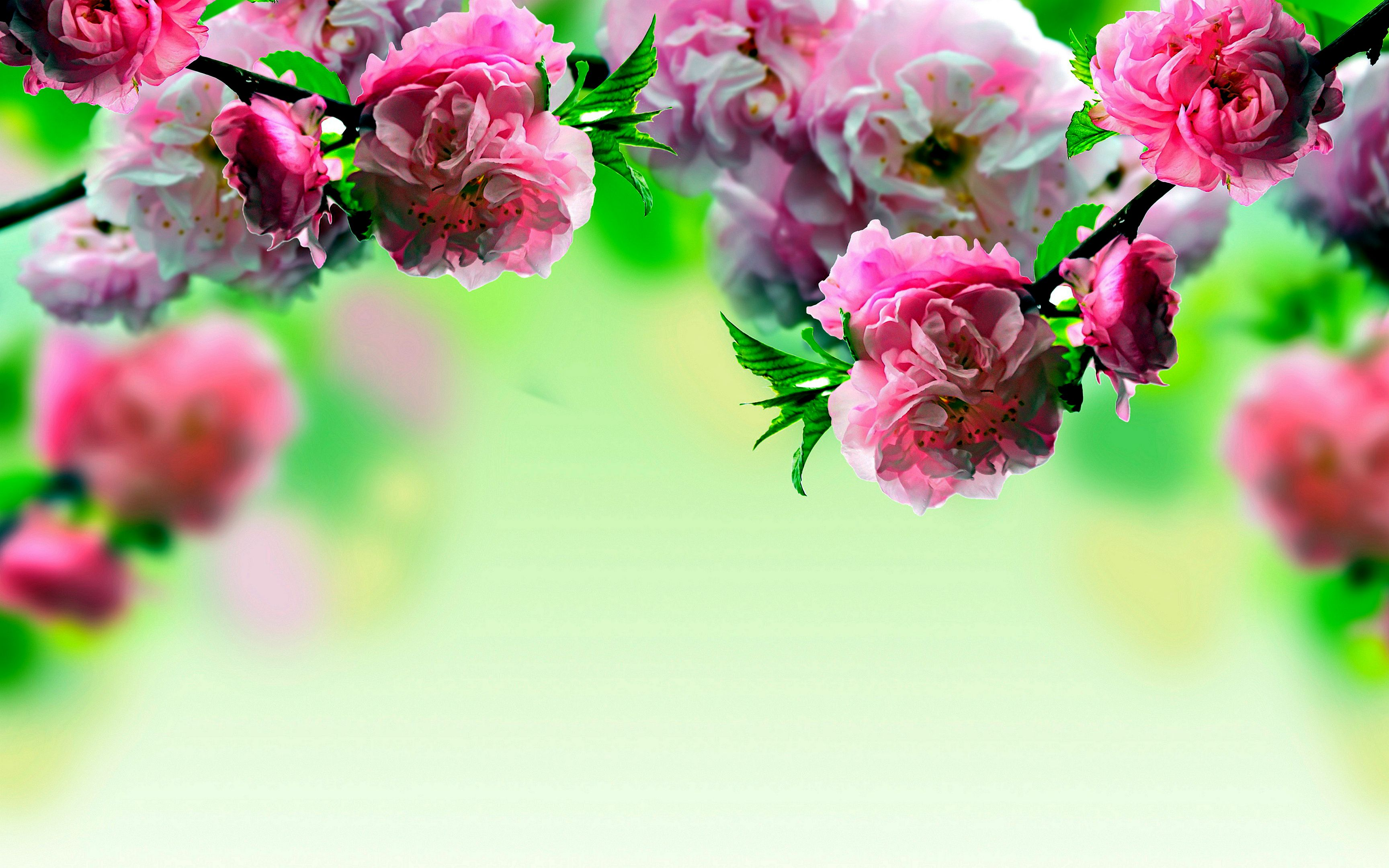 Spring Flowers Wallpaper High Definition Is 4k Wallpaper Yodobi Good Morning Friends Images Spring Flowers Wallpaper Good Morning Msg Tons of awesome flowers 4k wallpapers to download for free. spring flowers wallpaper high
