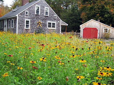replace your lawn with a meadow