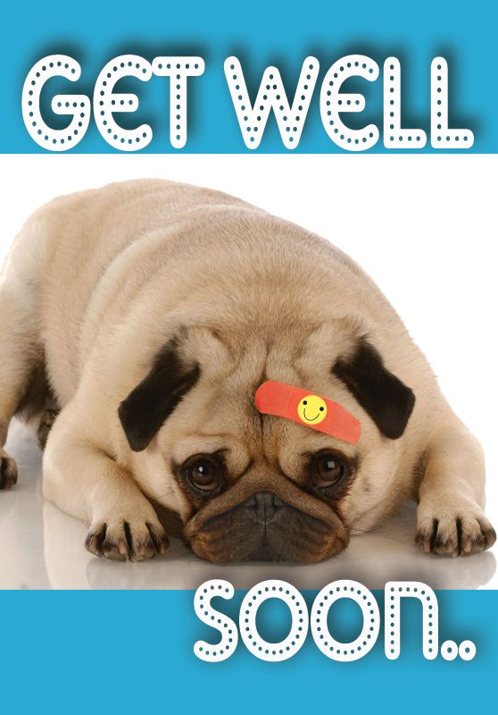 Get Well Get Well I Love Dogs